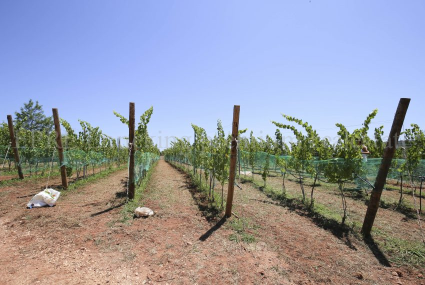 Biological Vineyard 6 Acres Farmhouse Silves Algarve-horse paddock-Enneking real estate