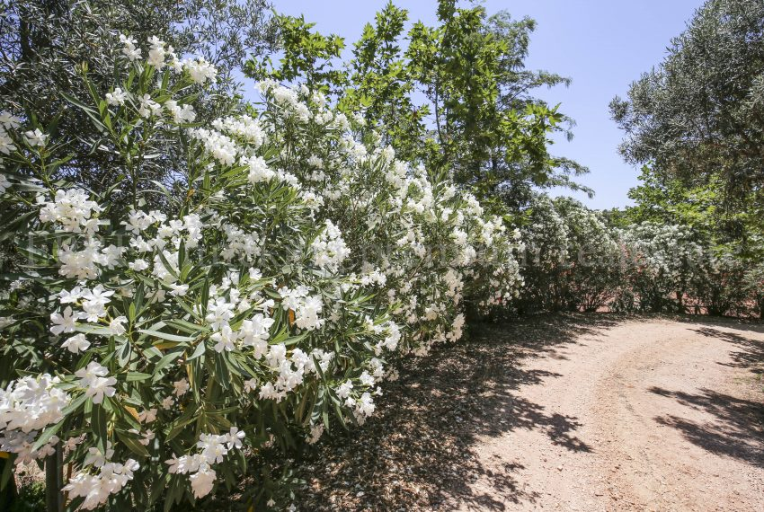 Biological Vineyard 6 Acres Farmhouse Silves Algarve-trees-Enneking real estate